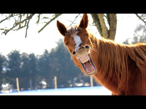 If it were not filmed, NO ONE WOULD BELIEVE - Funny Horse Videos