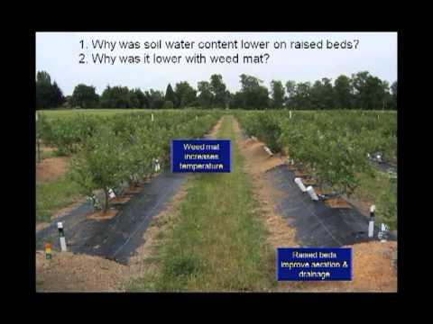 Organic Blueberry Production Research Project Webinar