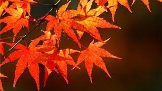 Осень. Маски текстовые в PRO SHOW. Урок №9 студии