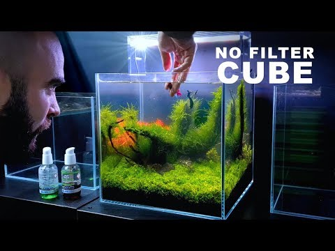ADDING *NEW* BETTA FISH To NO FILTER CUBE AQUARIUM & NAMING?? || MD FISH TANKS