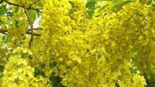 Download Ravin Nilaa kaayal MP3 song and Music Video