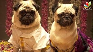 Dogs' love story for the first time in Tamil Cinema