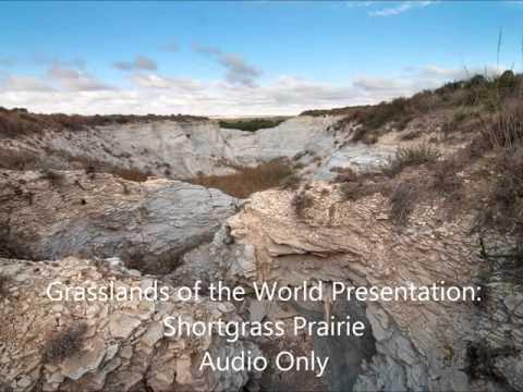 Grasslands of the World Presentation: Shortgrass Prairie