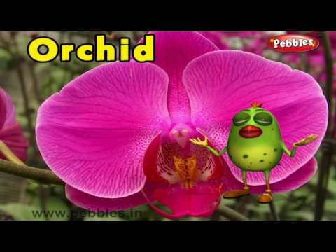 Orchid Rhyme | 3D Nursery Rhymes With Lyrics For Kids | Flower Rhymes | 3D Rhymes Animation