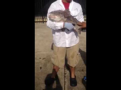 Easter weekend fishing at seawolf park youtube for Galveston fishing report seawolf park