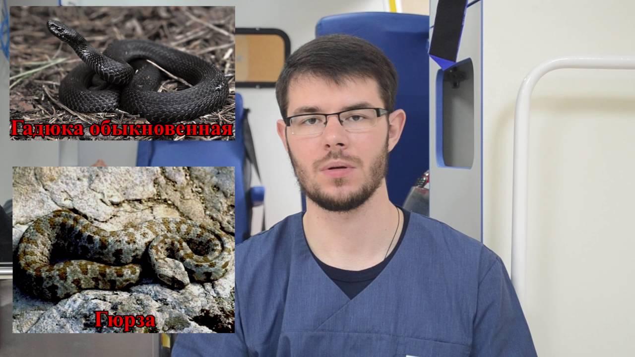 Неотложная помощь при укусе змеи