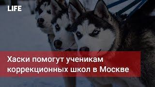 Смотреть видео Хаски помогут ученикам коррекционных школ в Москве онлайн