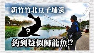 竹北豆子埔溪釣到鱘龍魚!!??   新竹雷強水溝釣點