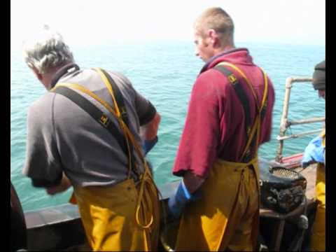 Whelk fishing.wmv