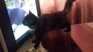 Кошка и передача о животных