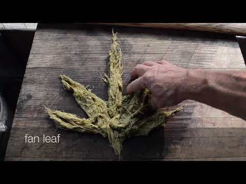 Making Paper From Plants: Cannabis Sativa