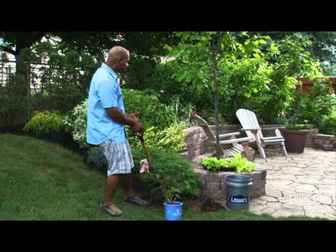 Landscaping with Trees and Shrubs: Types and Planting