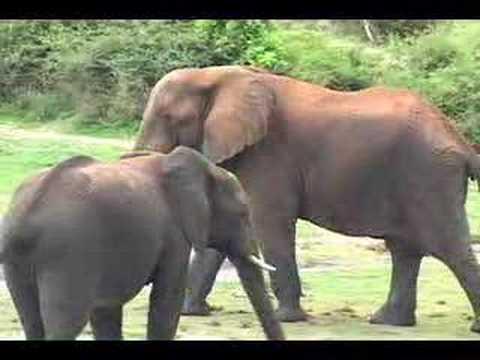 Safari Zambia & Botswana