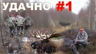 Загонная охота на лося и кабана. 11 декабря 2016г.