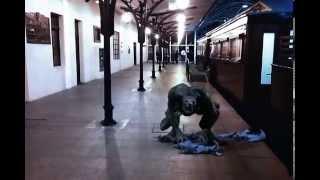Cena do Filme Um Lobisomem Americano em Curitiba - Gralha Azul Filmes