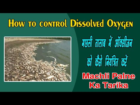 Machli Palne Ka Tarika | How To Control Dissolved Oxygen | Machli Palan In  Hindi