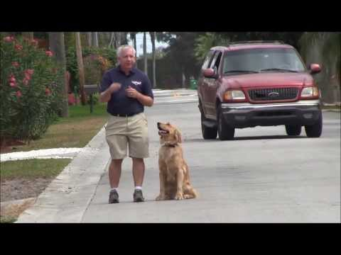 How to walk your dog off leash with The Miami Dog Whisperer!