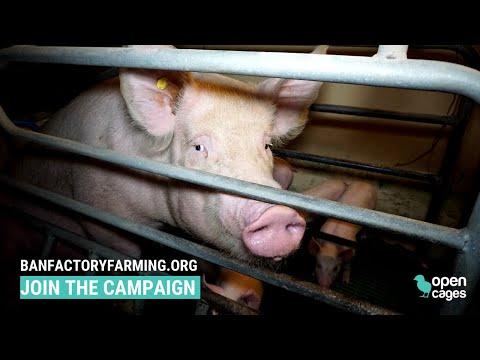 Factory Farming: The Next Pandemic?
