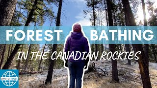 The Art of Shinrin Yoku: Forest Bathing in the Canadian Rockies | SmarterTravel