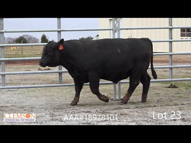 Clemson Extension Bull Test Lot 23