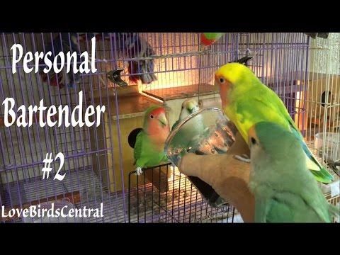 Personal Bartender #2 | Spirulina | LoveBirdsCentral #217