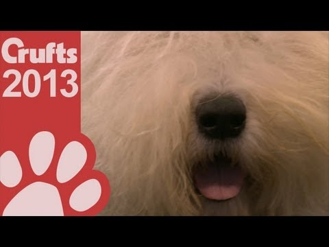 Old English Sheepdog - Best Of Breed - Crufts 2013
