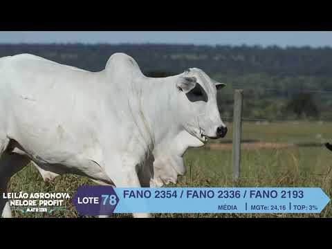 LOTE 78 FANO 2354 X 2336 X 2193