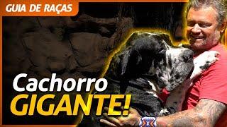 DOGUE ALEMÃO, O MAIOR CACHORRO DO MUNDO! | RICHARD RASMUSSEN