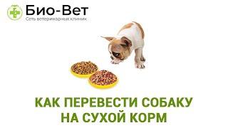 Как Перевести Собаку На Сухой Корм&Чем Кормить Собаку. Ветклиника Био-Вет