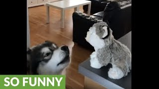 Jealous dog wants stuffed animal toy all to himself