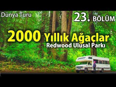 Dünya'nın En Yaşlı Ağaçları | Redwood | Amerika'da Karavan Hayatı | 23. Bölüm