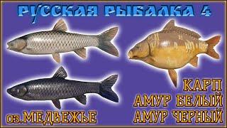 РР4 МЕДВЕЖЬЕ КАРП АМУР РУССКАЯ РЫБАЛКА 4 МЕДВЕЖКА КАРП RUSSIAN FISHING 4 BEAR LAKE GRASS CARP