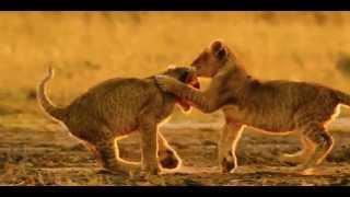 Planet Earth Tribute: Nature Trailer - BBC (HD 1080p)