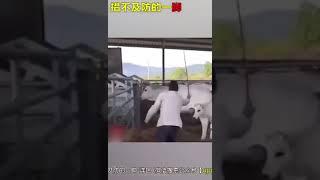 Позитивное видео Dschinghis Khan по Японски :)