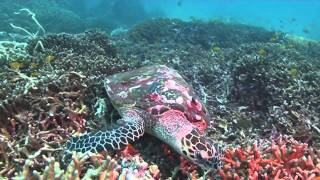 Sea Turtles Micro Documentary