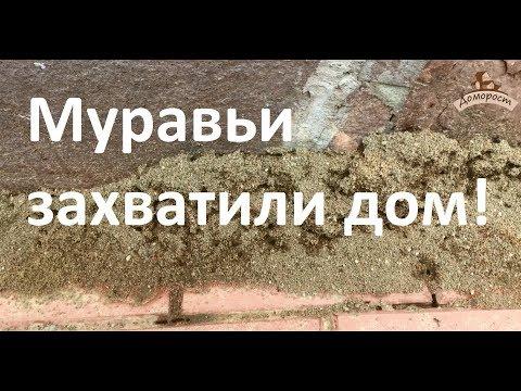 Спасаем дом от муравьев