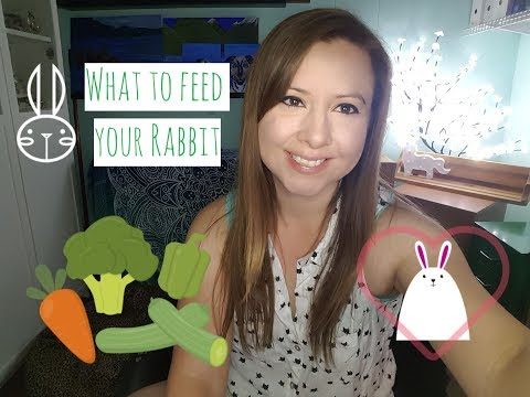 Food For Rabbits - Hay, Veggies, Fruit - Rabbit Care - What I Feed My Rabbits
