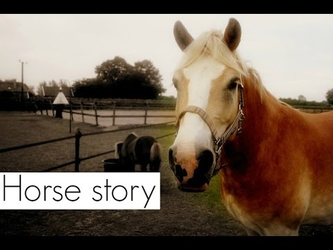 MY HORSE STORY! - Speciale video.. 2000+ abonnees ♥♥