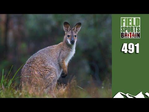Fieldsports Britain - Wallaby Control