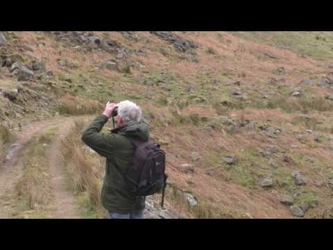 Terry Pickford examining abandoned Peregrine territory. Forest of Bowland