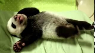 Напутствие на выходные от маленькой панды — Рамблер Видео 7