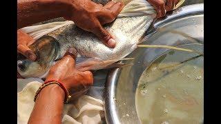 Fish Breeding System / Big Head  Fish Eggs  Hatchery