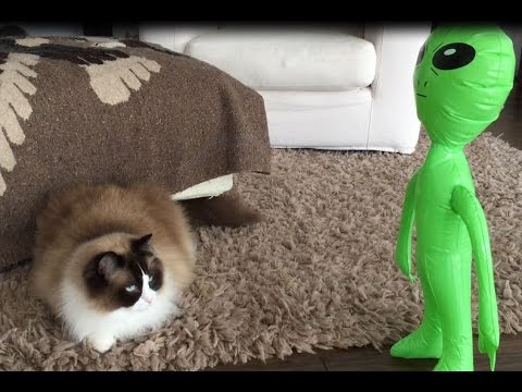 Independence Day- Cat vs Alien