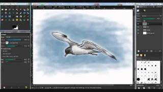 How to draw a Seagull - Tutorial -