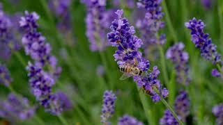 """""""Rettet die Bienen"""" im eigenen Garten"""