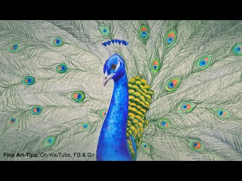 How to Draw a Peacock With Color Pencils - Drawing Feathers and Birds