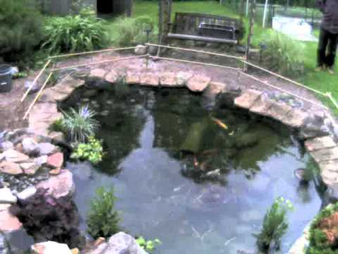 Koi Jumping From Pond