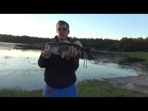 bama frogs spro bbz-1 rat fishing contest - youtube, Soft Baits
