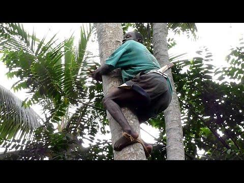 Zanzibar.Spice tour - Butterfly song Jambo bwana / Занзибар.Остров Специй - Песня Джамбо