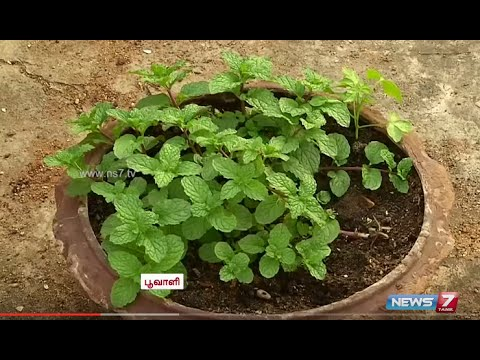 Growing medicinal herbs and vegetables on the terrace | Poovali | News7 Tamil